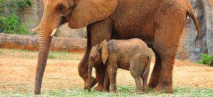 Sloni zoo