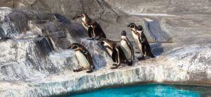 Tučňák zoo