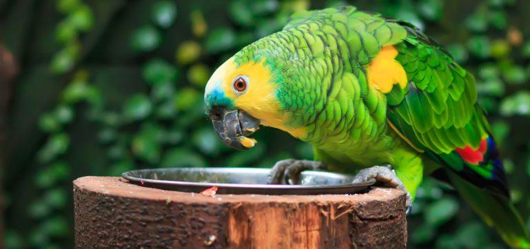 Amazoňan zoo
