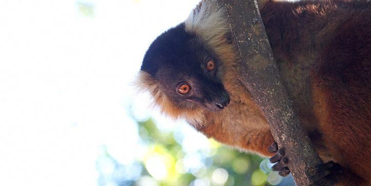 Komba zoo