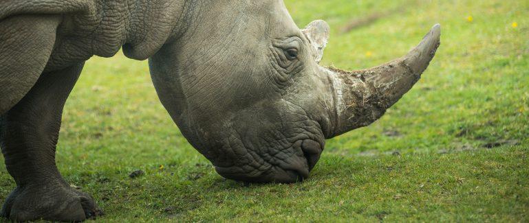Nosorožec zoo