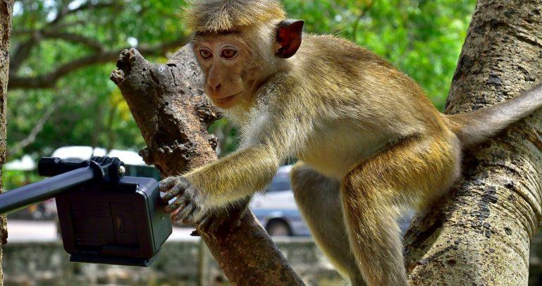 webkamery zoo