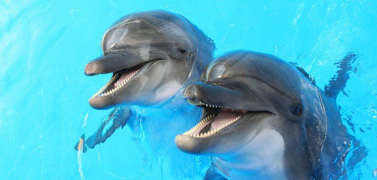 Delfín zoo