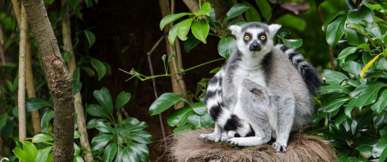Lemur zoo