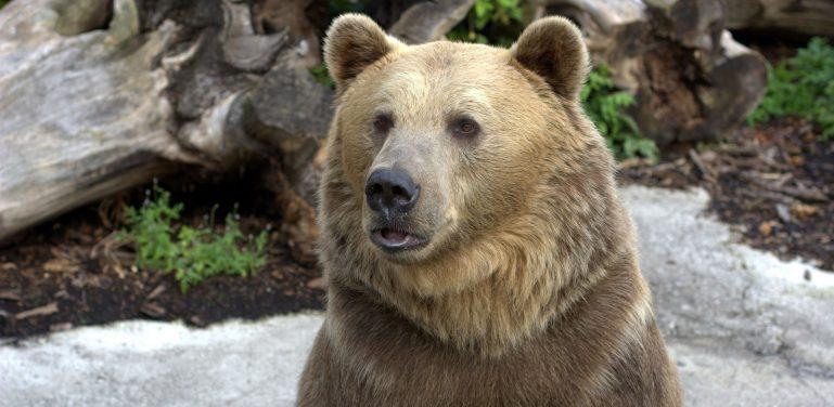 medvěd zoo