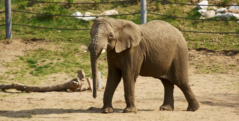 slon zoo